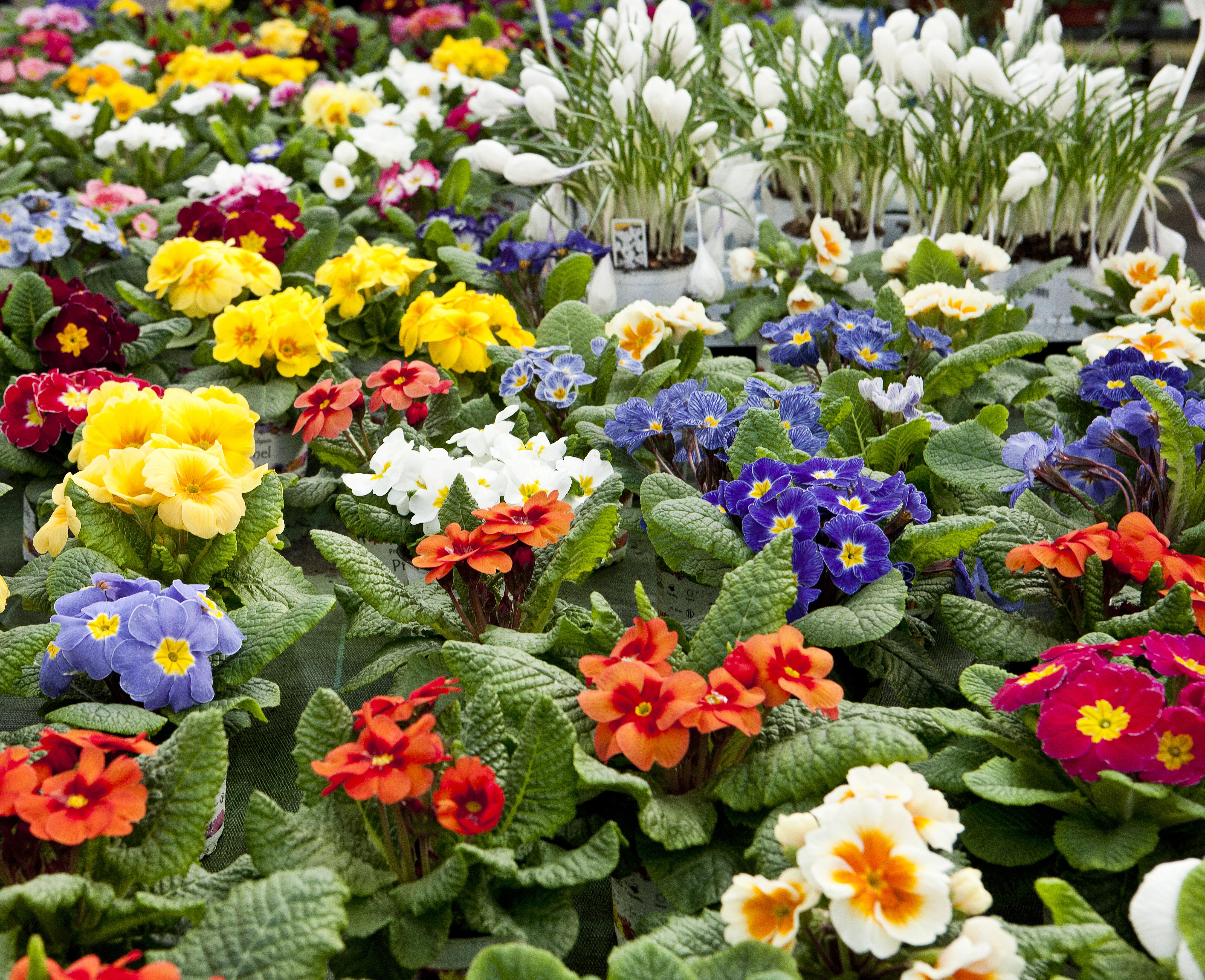 Gartenbau Friedrich Pflanzen